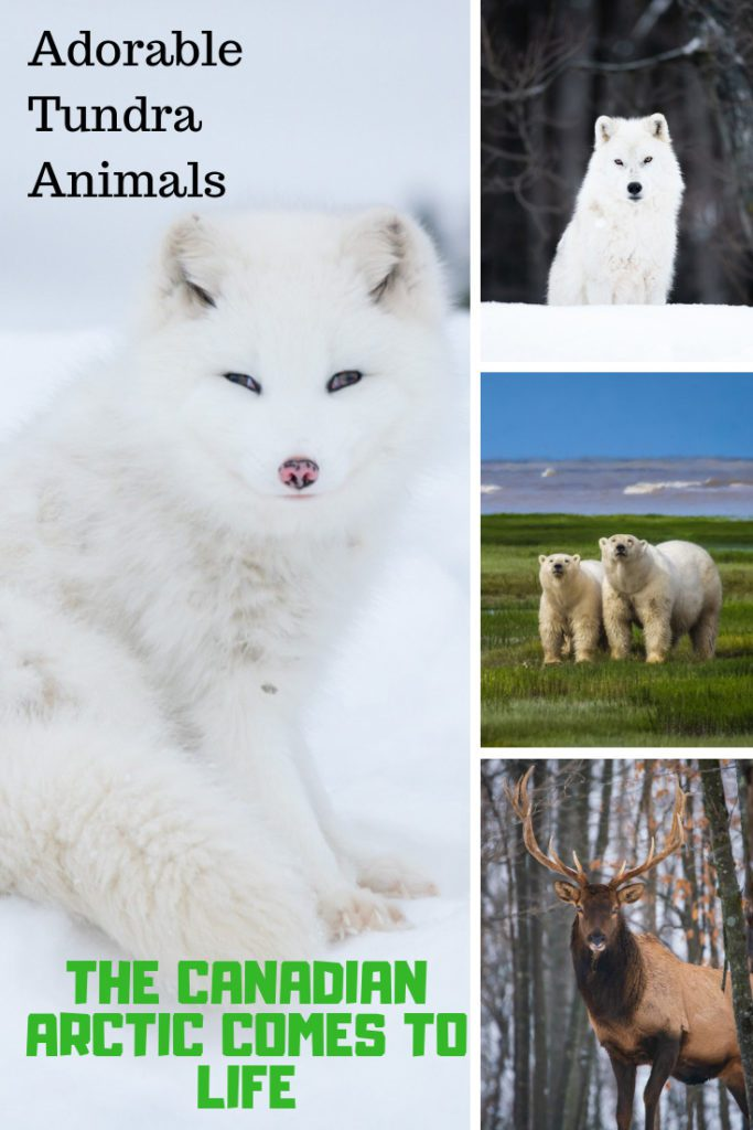 Lovely Tundra Animals