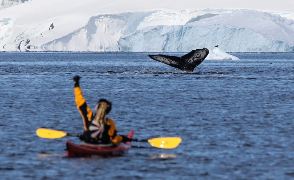 Kayak Journeys