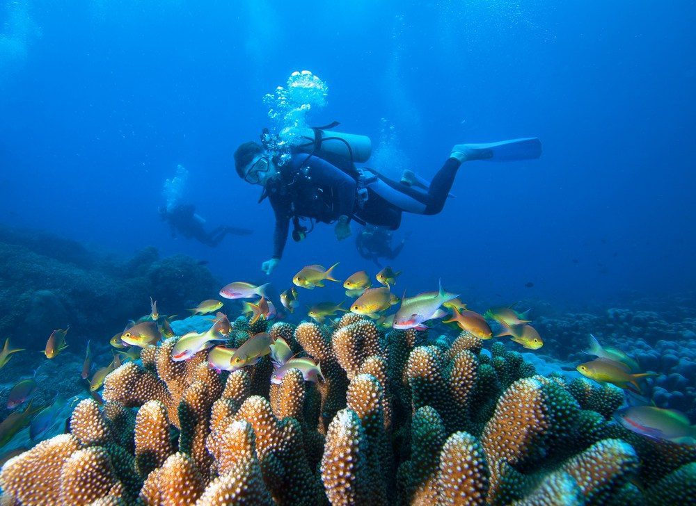 Best Destinations in the World to Practice Diving | #MacroTraveller