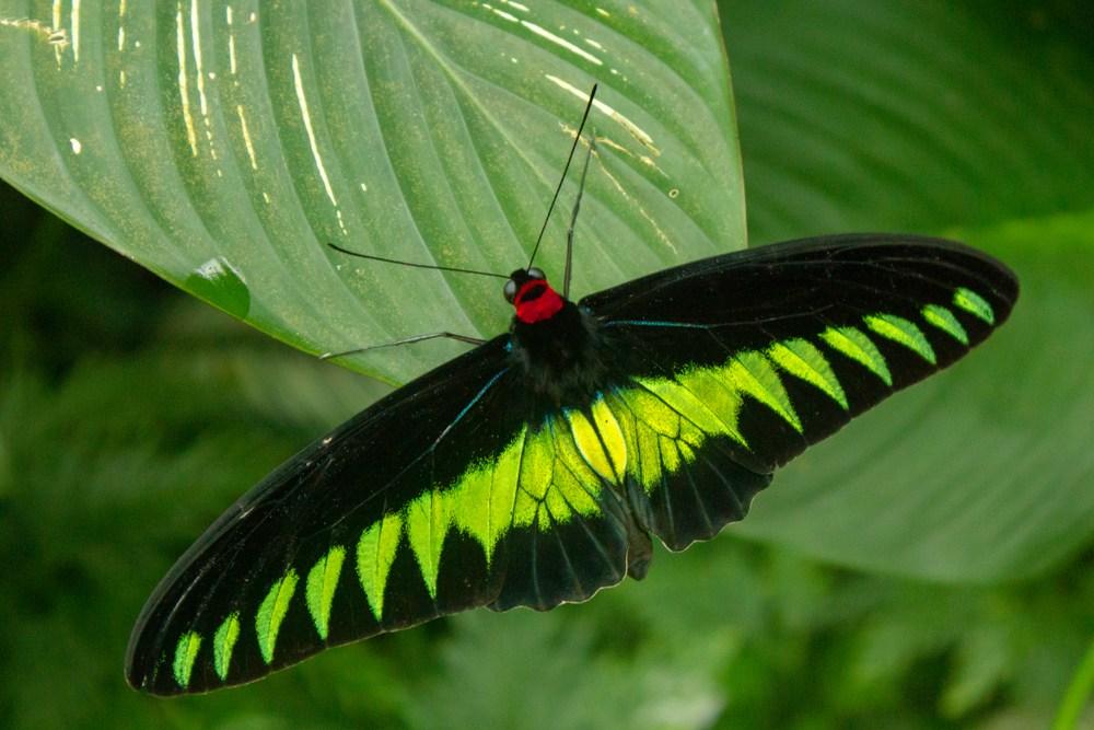 KL-Butterfly-Park-malaysia