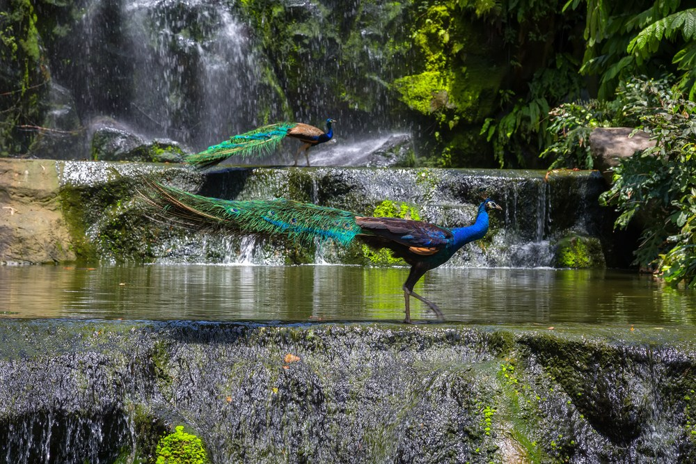 KL-Chook-Park-malaysia