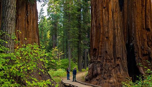 Redwood Forest Journey
