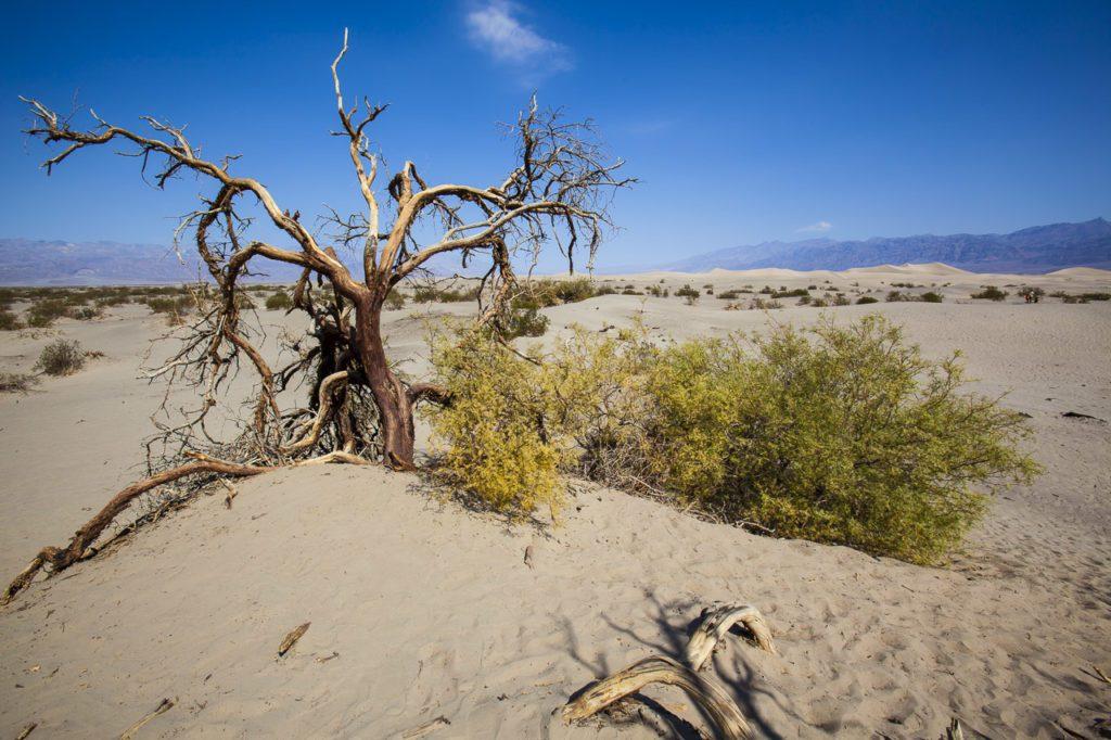 california-road-trip-death-valley-road