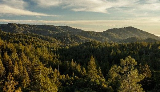 Everything You Need to Plan Your Next Redwood Forest Trip