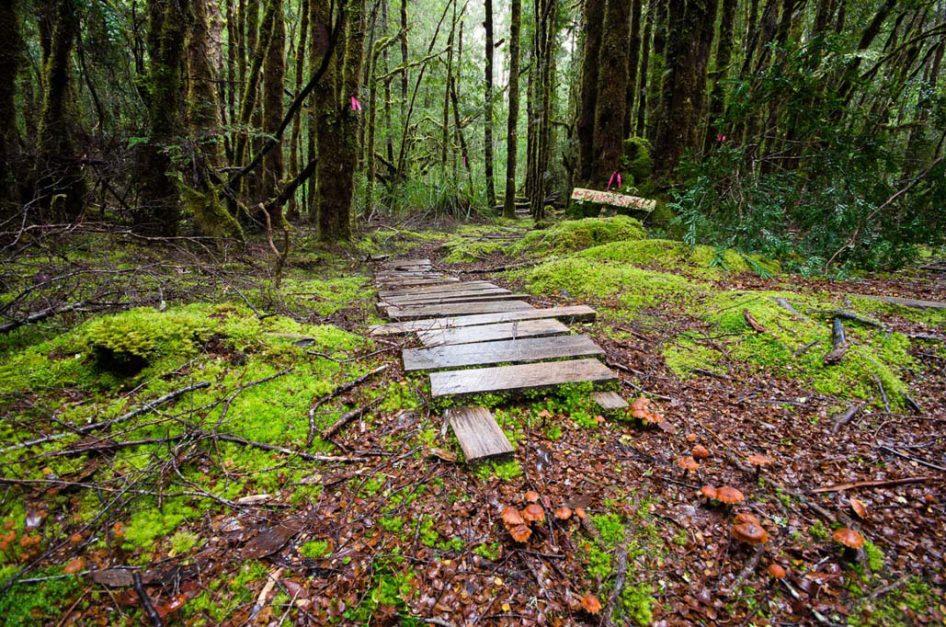 Embrace your wild facet on Tasmania's West Coast