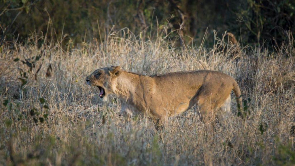 Kruger Nationwide Park