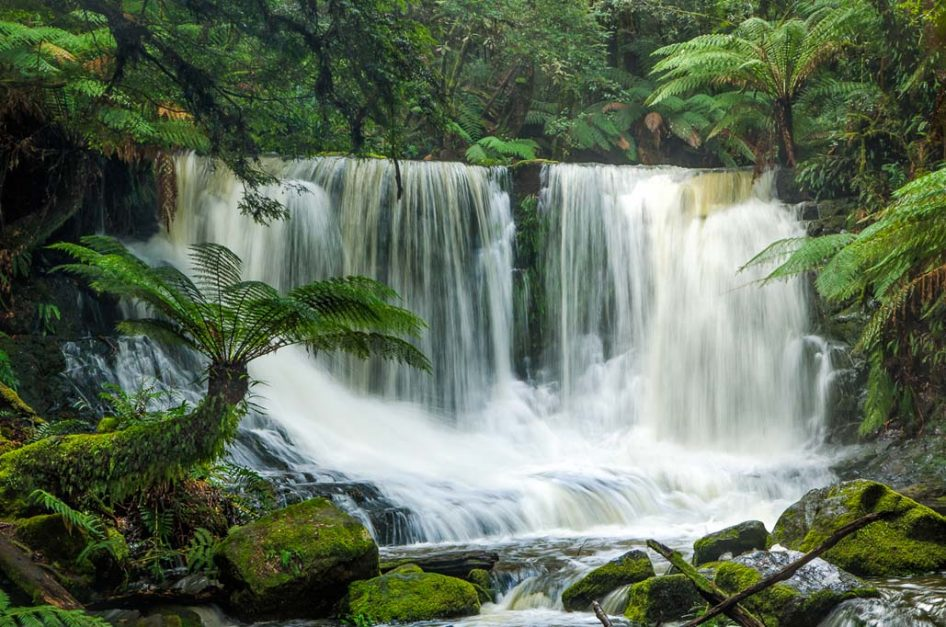 See a platypus and discover the waterfalls of the Derwent Valley