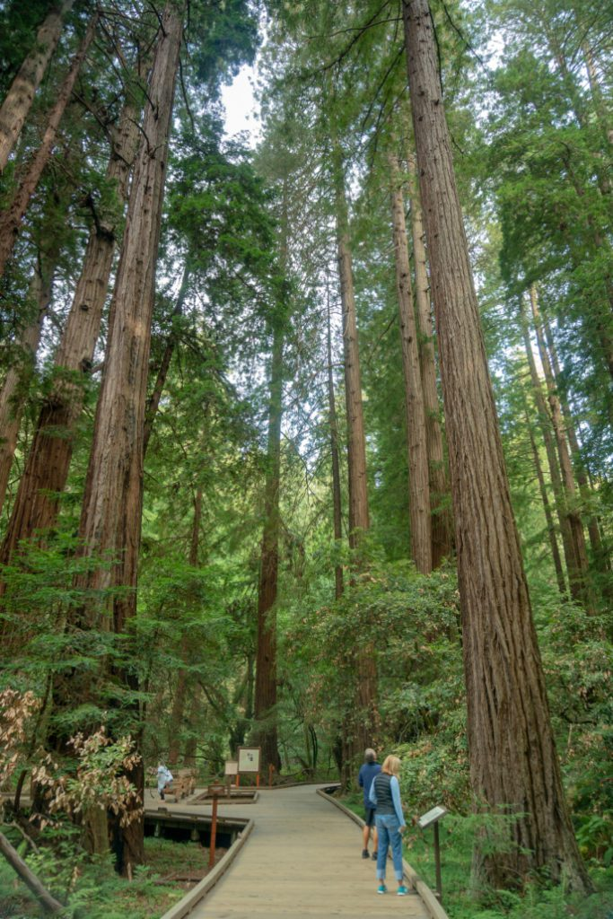 Redwood Hikes in North Bay