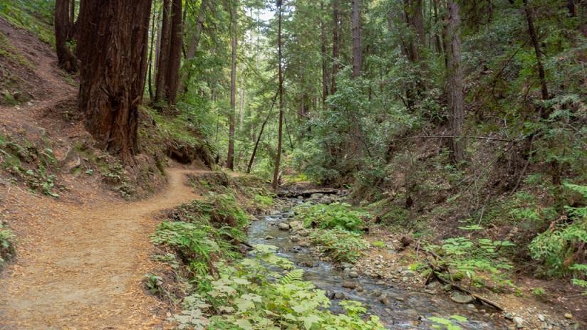 Redwood Hikes in Santa Cruz