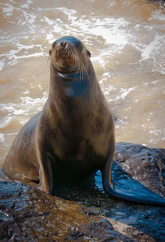 things-to-in-lap-paz-mexico-sea-lion