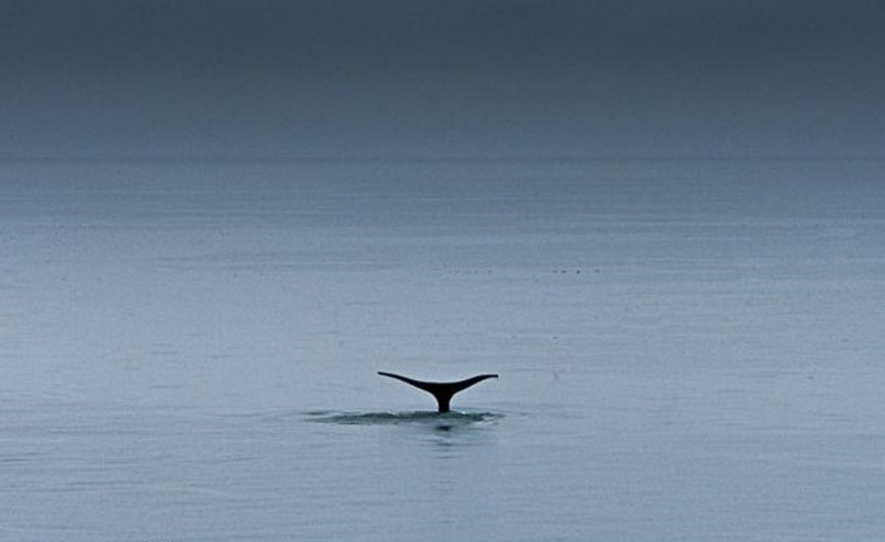 things-to-in-lap-paz-mexico-whale