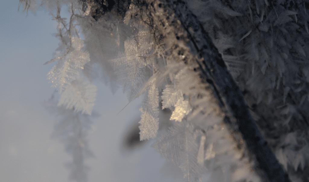 Frozen Tundra1
