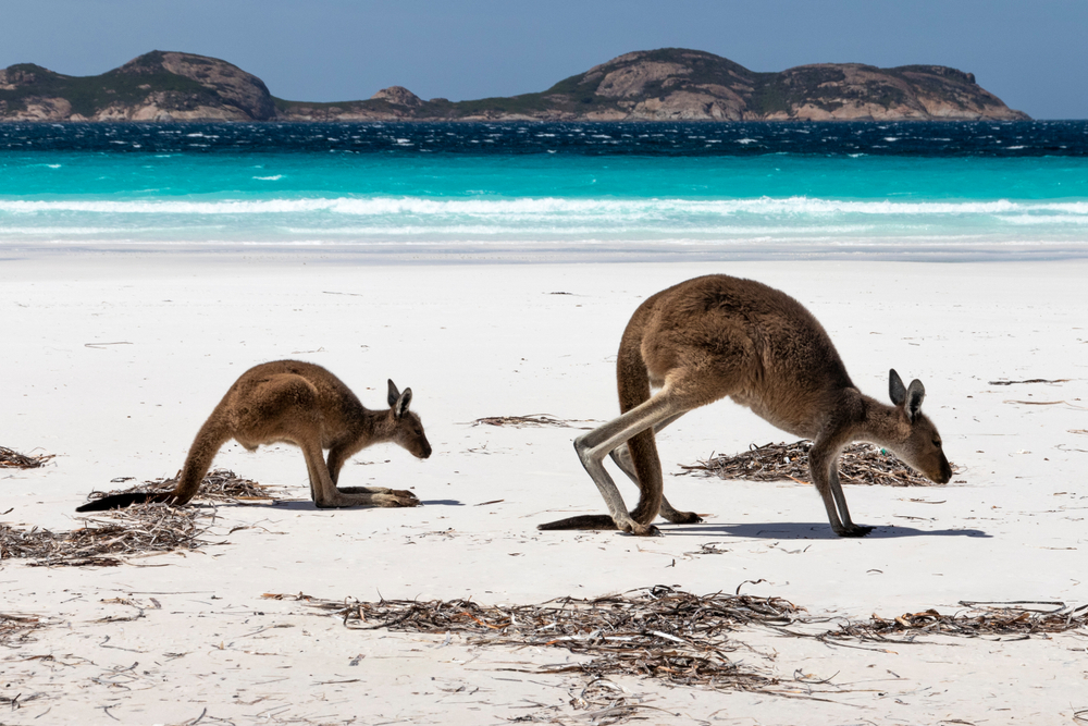 Wild card locations in Australia and New Zealand for island lover