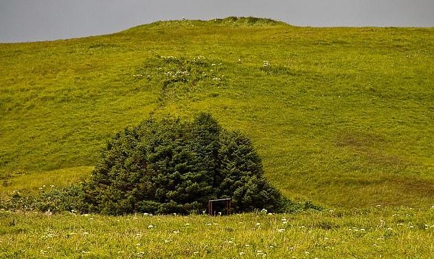 Adak national forest