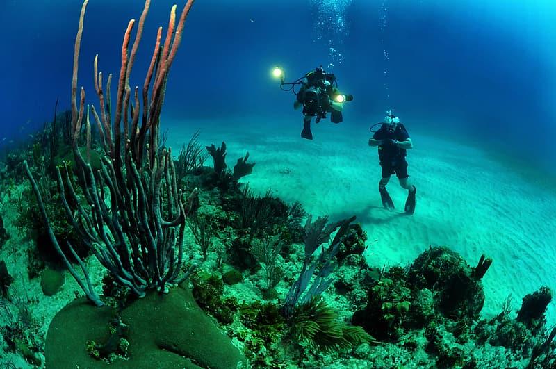 Diving In Ogasawara