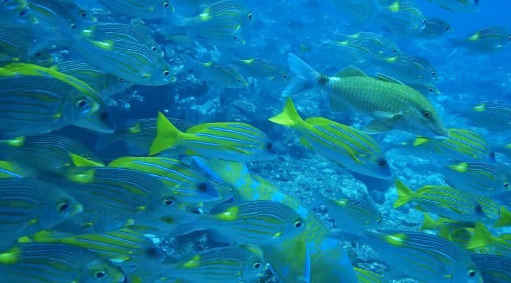 Ogasawara Islands Fish