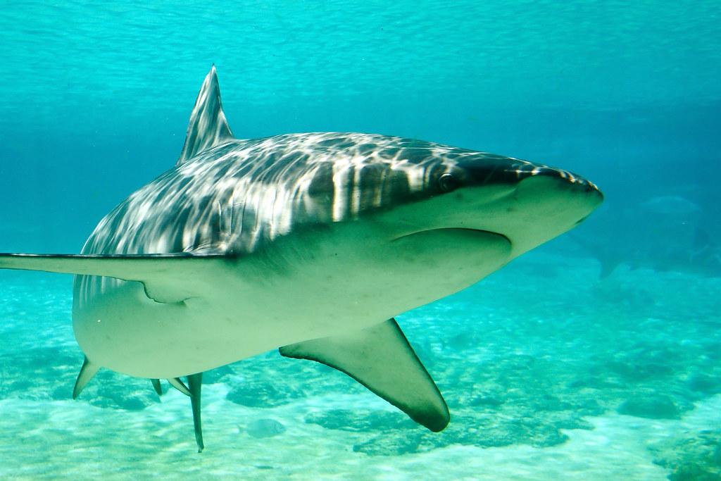 Shark in Ogasawara