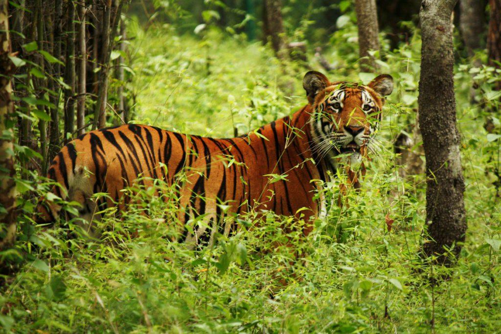 wild animals in Chitwan Nepal