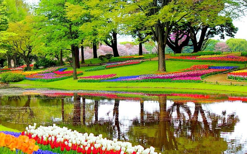 netherlands beauty flower