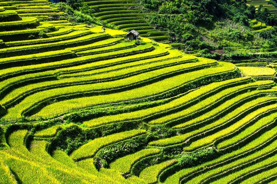Yuanyang Terraces china