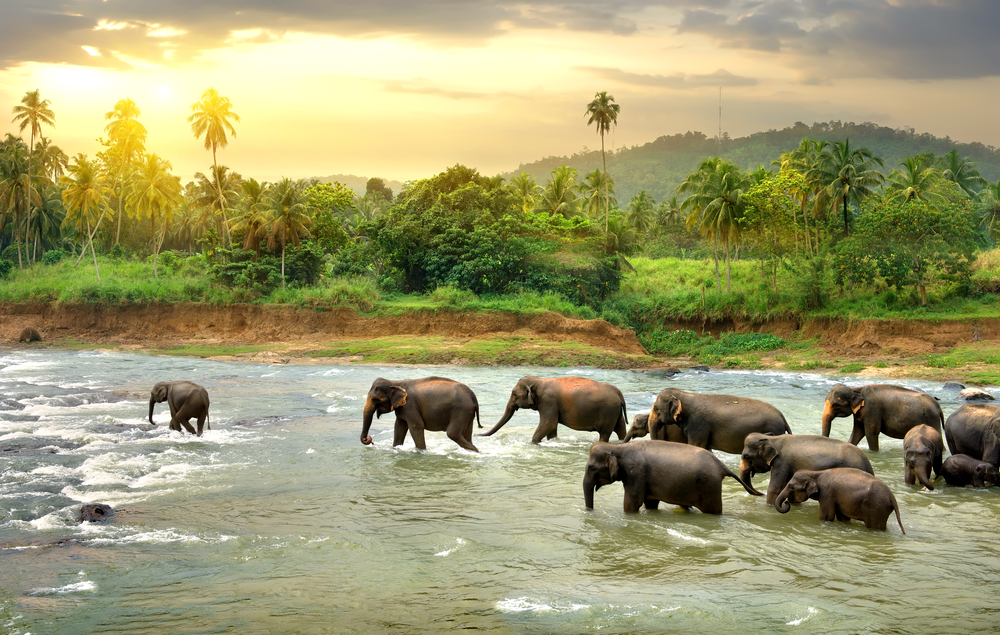 things to do SRI LANKA 2020